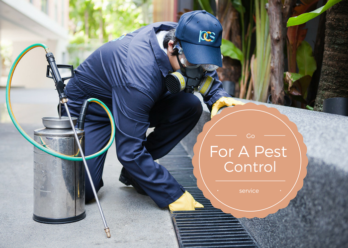 Removing Pests From Your Newly Purchased House
